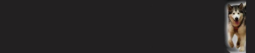 Fenrirkin Sled Dogs